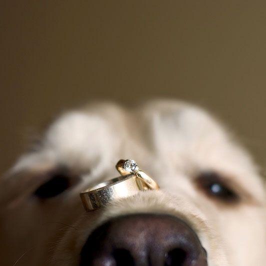 Votre animal de compagnie à votre mariage